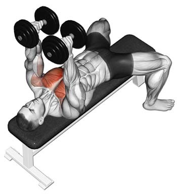 An illustration showing An illustration showing dumbell chest exercise on a bench