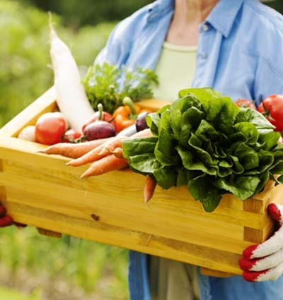 An image of a gardener who holding vegetables in basket