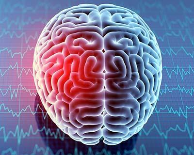 An image of an human brain top view
