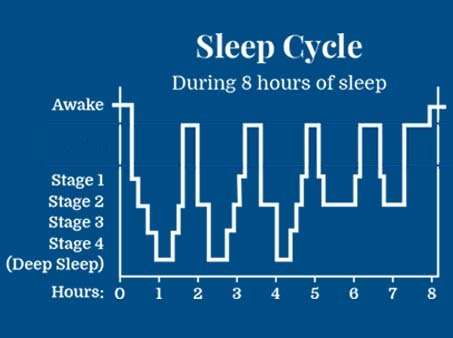 An image showing sleep cycle