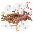 An image of Cordyceps Structure..